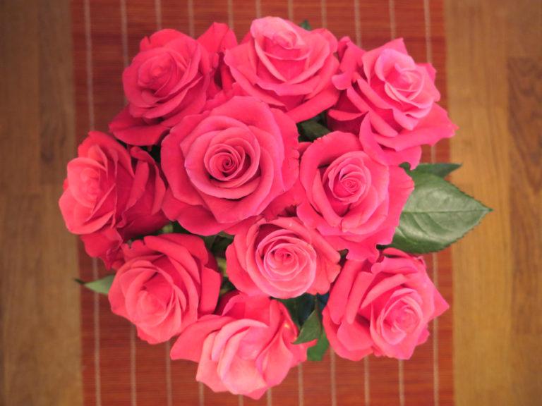 roser-juni